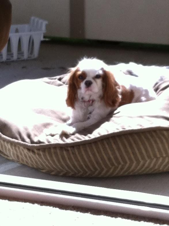 Jack in the Sun
