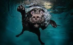 swim dog
