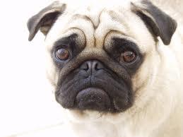 whining dog