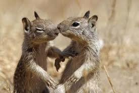 squirell 4