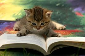 kitty reading
