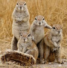 squirreldudes
